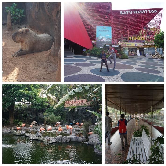 D1 - Zoo.jpg