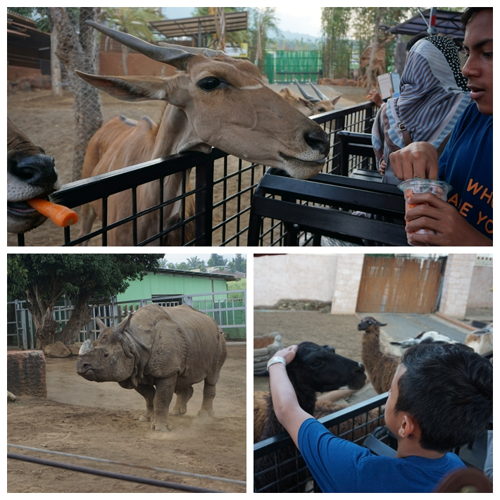 D1 - Zoo2.jpg
